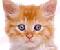 Pet The Kitten